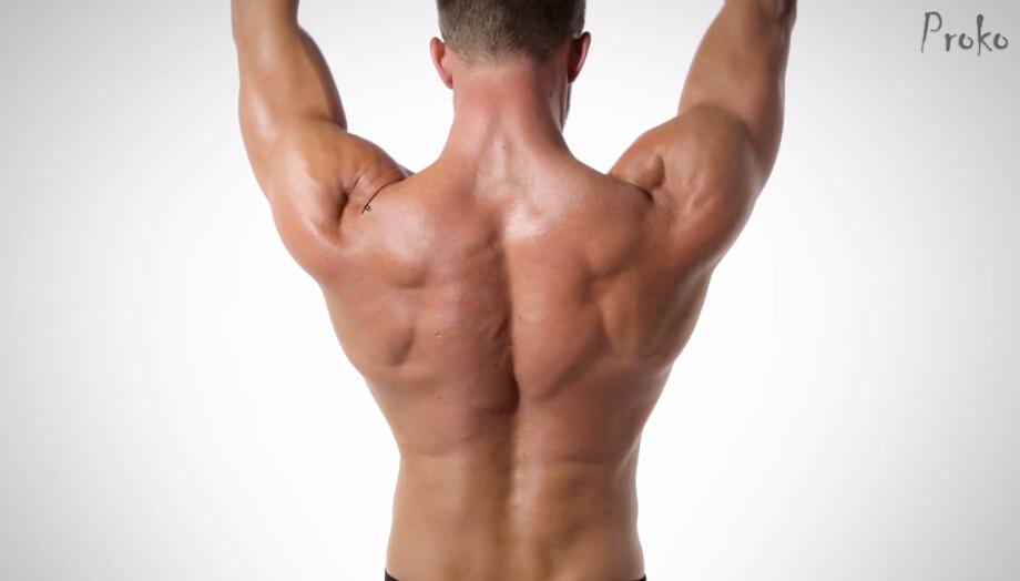 qq会员360_人体后背肌肉讲解 教程 花魁小站
