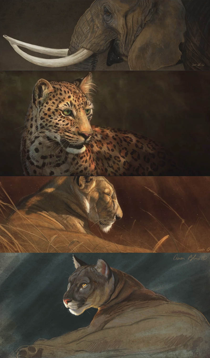 生物艺术教学   野生动物绘画教程包,