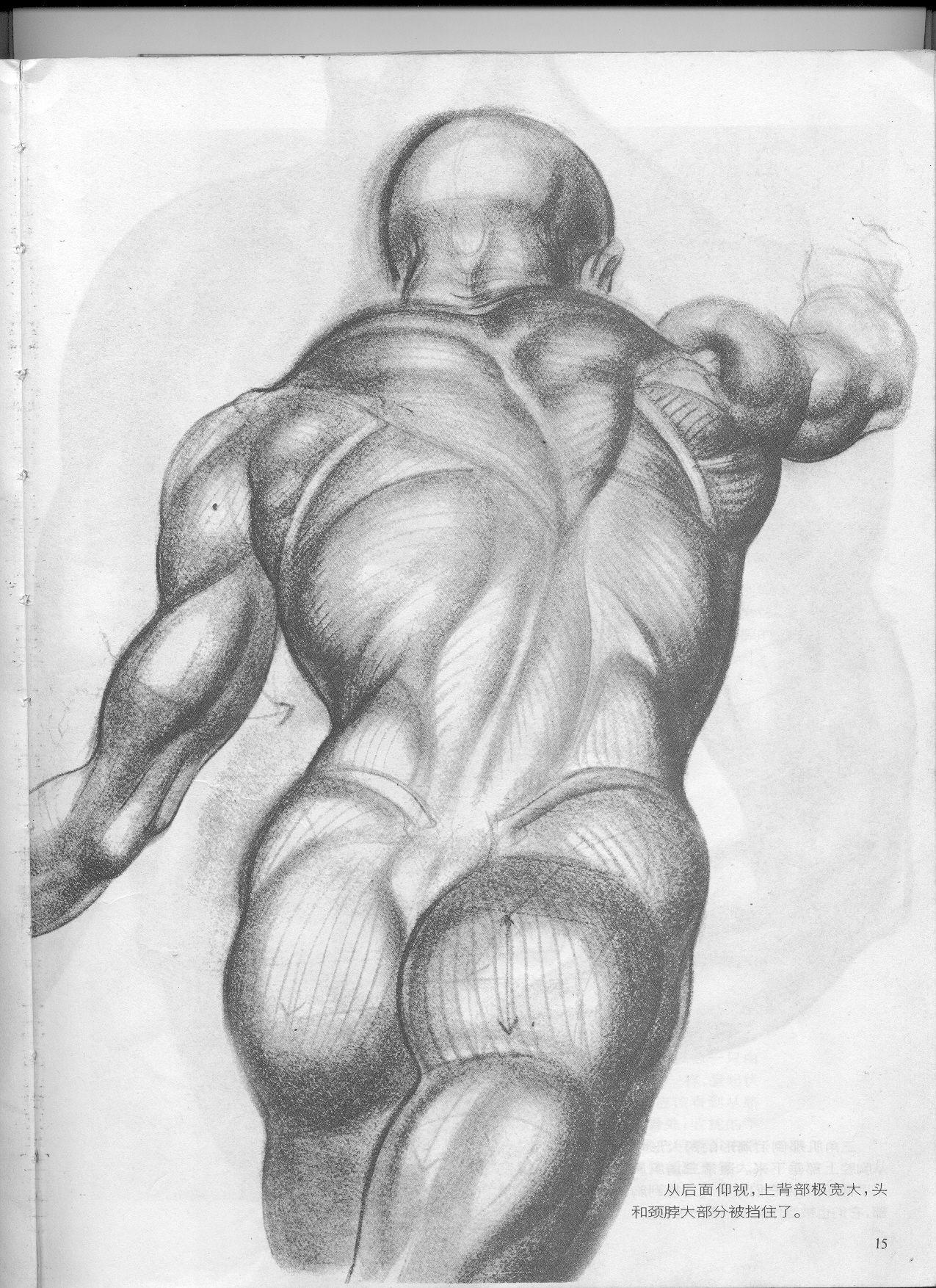 动态素描人体结构